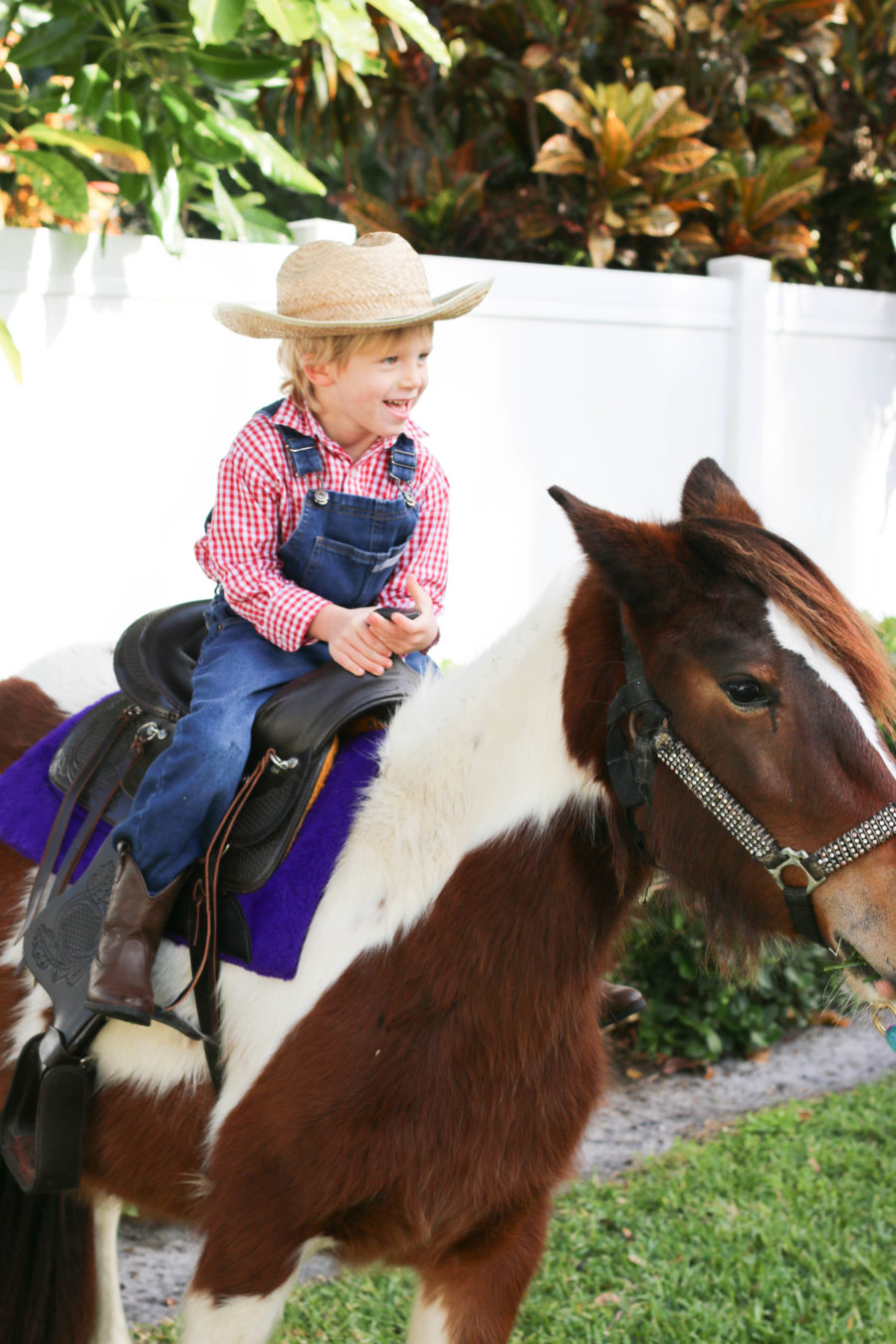 Pony Rides And Petting Zoo Tucks Down On The Farm Party
