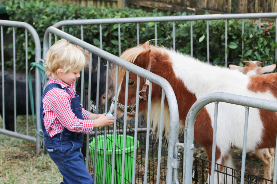 Pony rides and Petting Zoo - Tucks down on the farm party